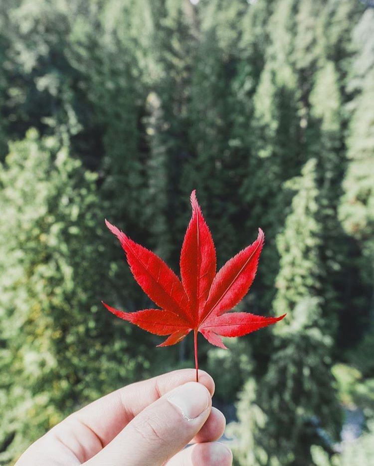 Foto foglia rossa stacco colori - Composizione Fotografica
