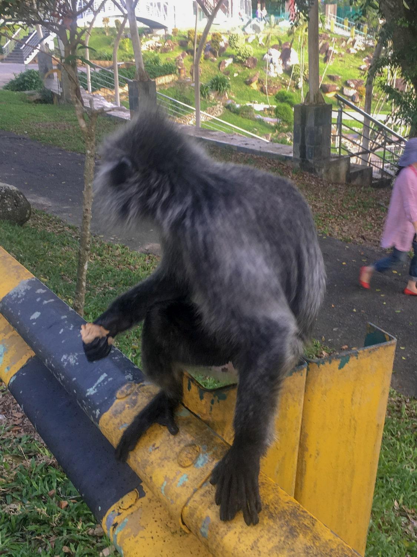 Foto scimmietta Thailandia | Foto sfocate iPhone