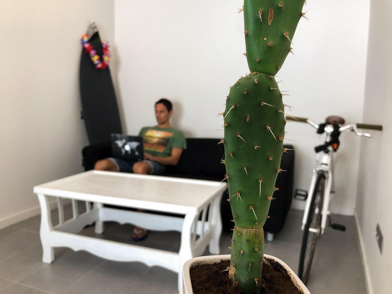 Immagine cactus completamente a fuoco