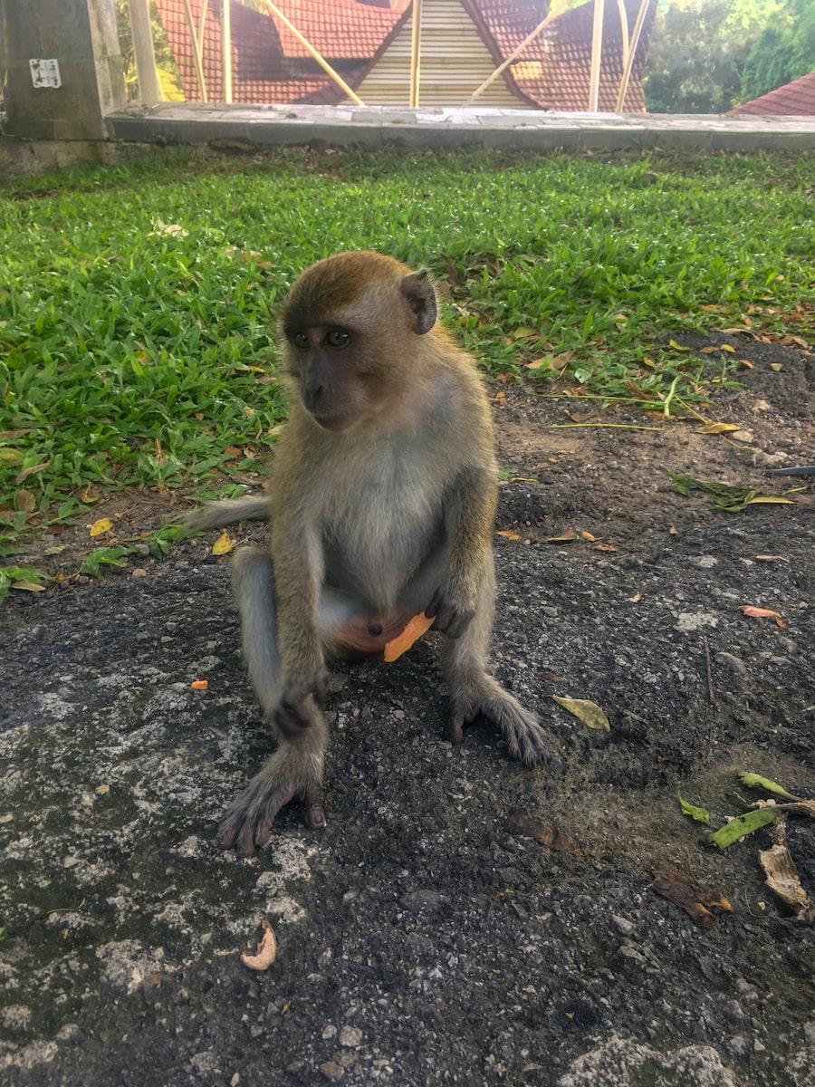 Scimmietta - Scatto rapido