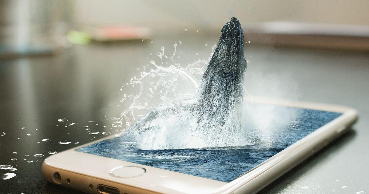 Immagine copertina perchè comprare iPhone 11
