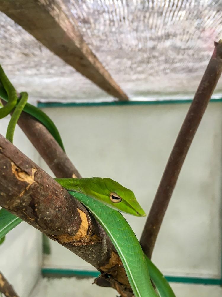 Serpente Macro