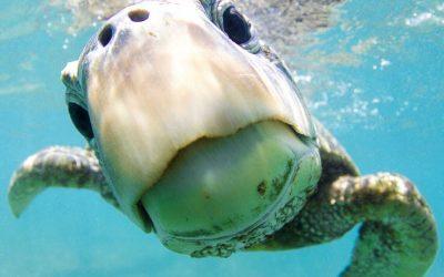 Come fare fantastiche foto subacquee con il tuo iPhone?