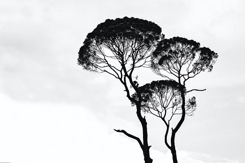 scattare in bianco e nero